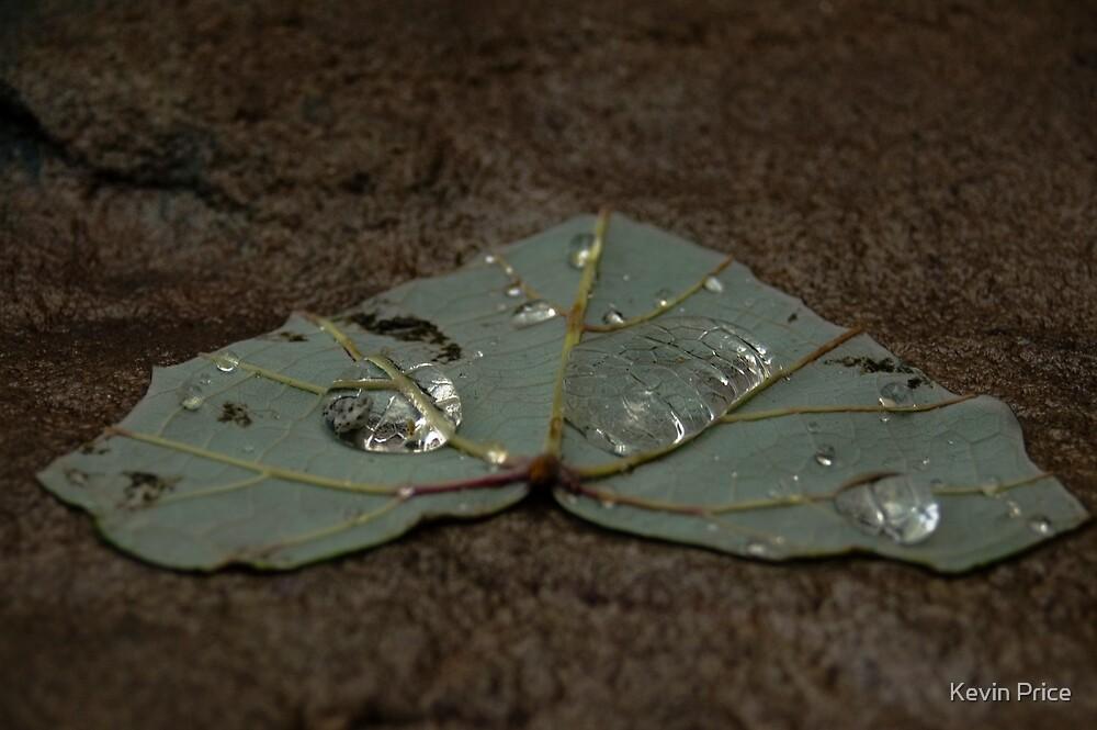 Leaf by Kevin Price