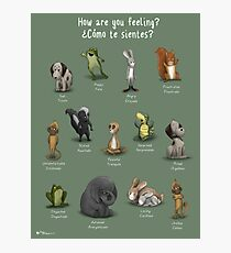 How Are You Feeling? English/Spanish Photographic Print