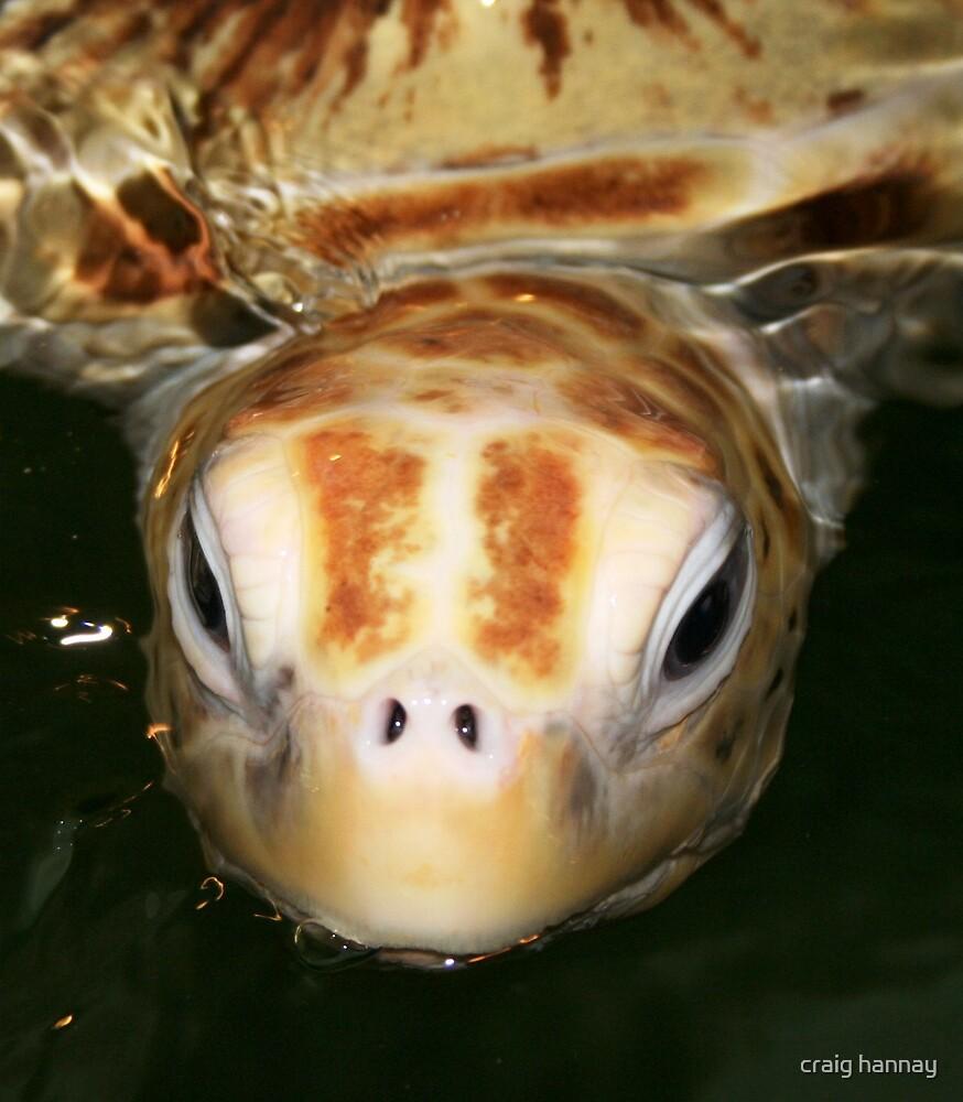 turtle by craig hannay