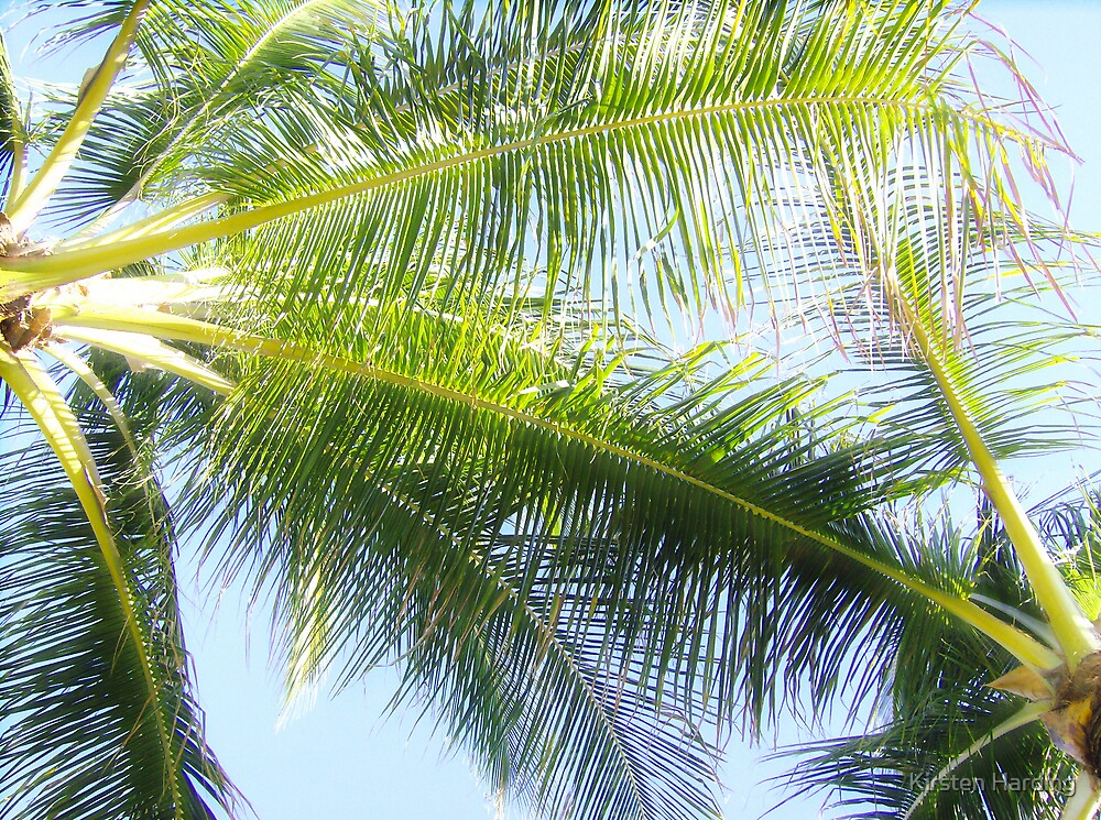 Palm Leaves by Kirsten Harding