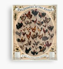 Antique Infographic - The Poultry of the World (1868) Metal Print