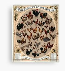 Antique Infographic - The Poultry of the World (1868) Canvas Print