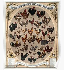 Antique Infographic - The Poultry of the World (1868) Poster