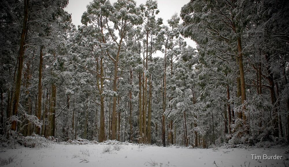 Winter's Day 3 by Tim Burder