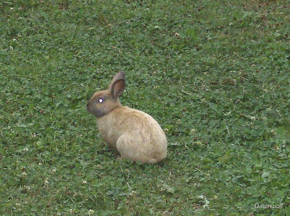 Bunny Bunny by Dawnwolf