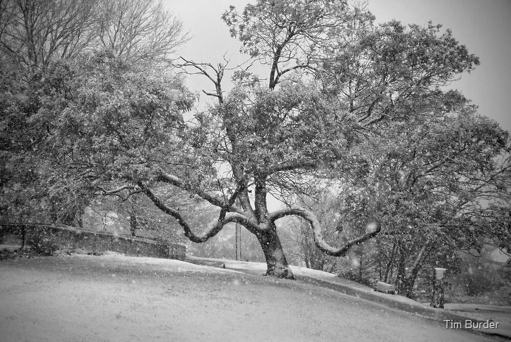 Winter's Day 4 by Tim Burder