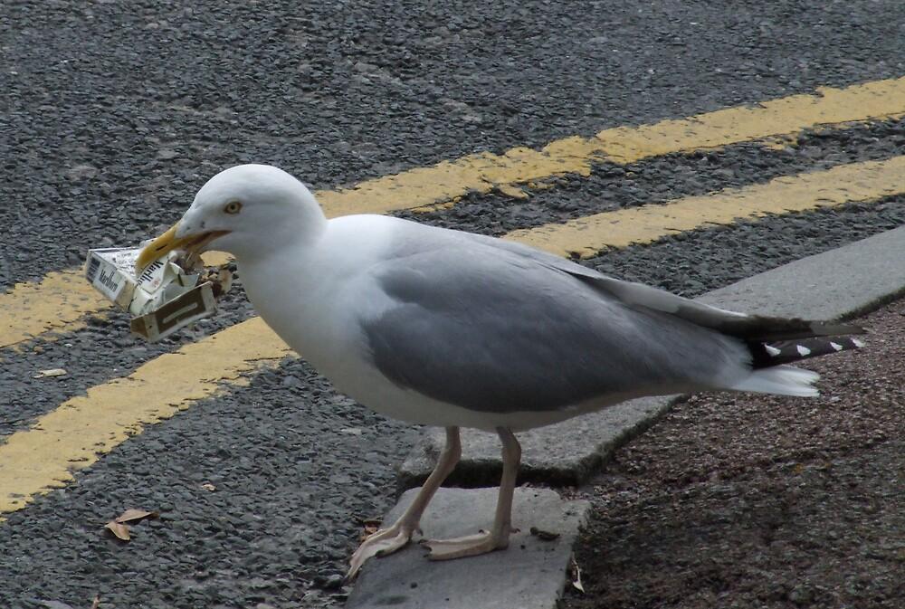 Gull with Malborough by John Thurgood