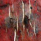 Cracked Snow Gum Bark by John Barratt