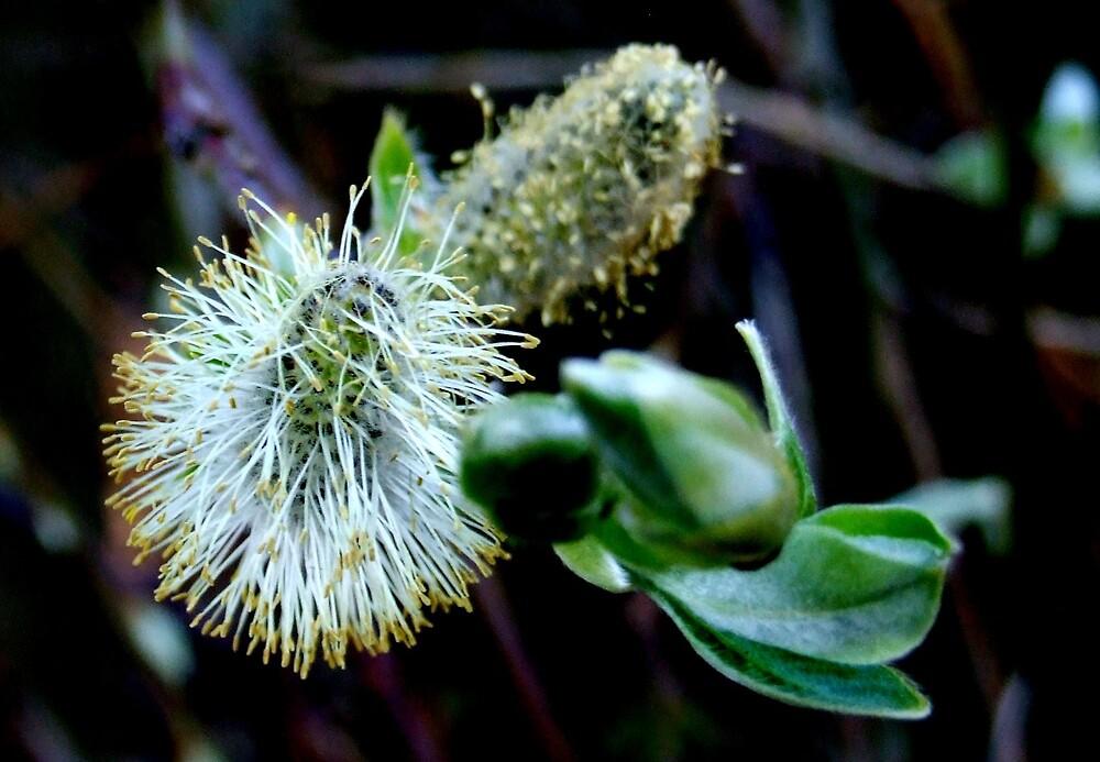 Pollen by John Thurgood