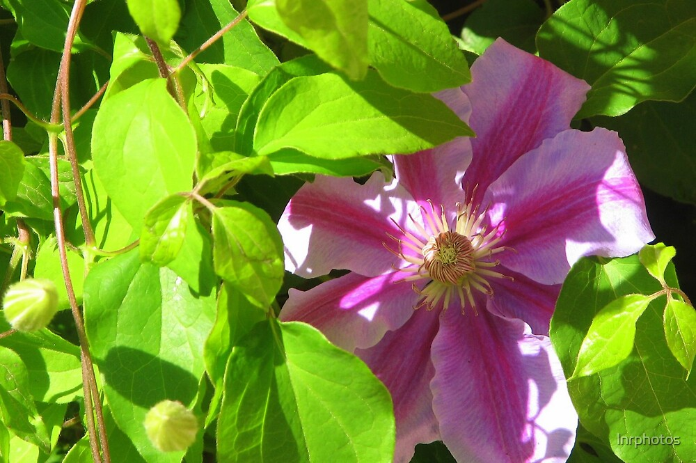 Purple Flower by lnrphotos
