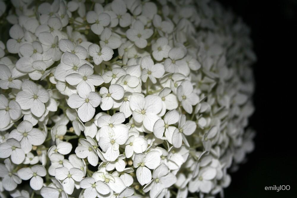 Carnation by emilyl00
