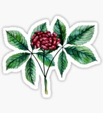 Watercolor ginseng berries Sticker