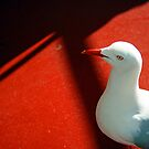 Seagull on Red by kaneko