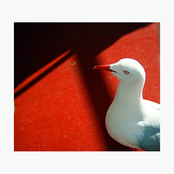 Seagull on Red Photographic Print