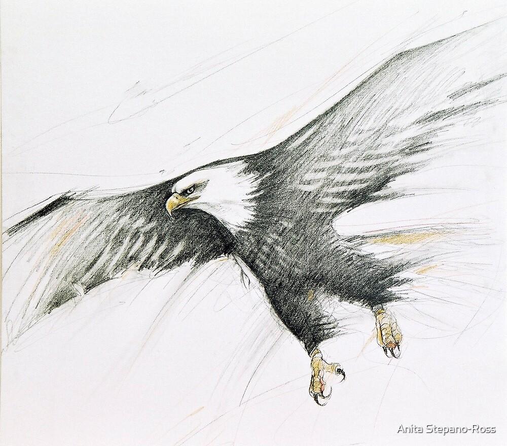 eagle flight by Anita Stepano-Ross