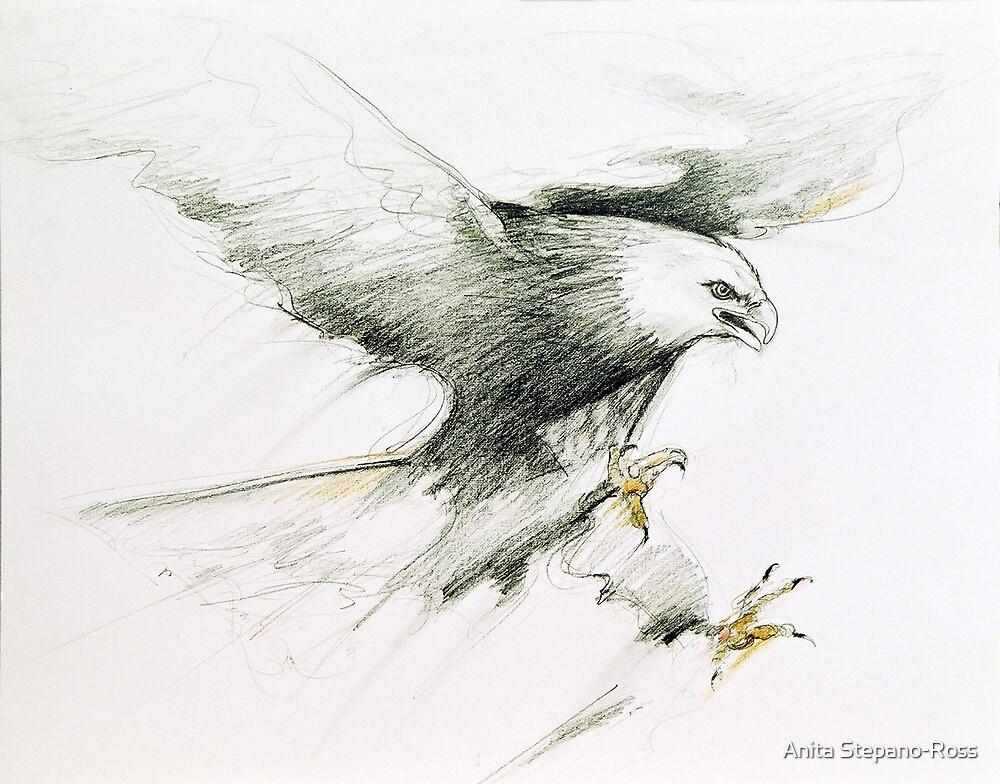 eagle 1 by Anita Stepano-Ross