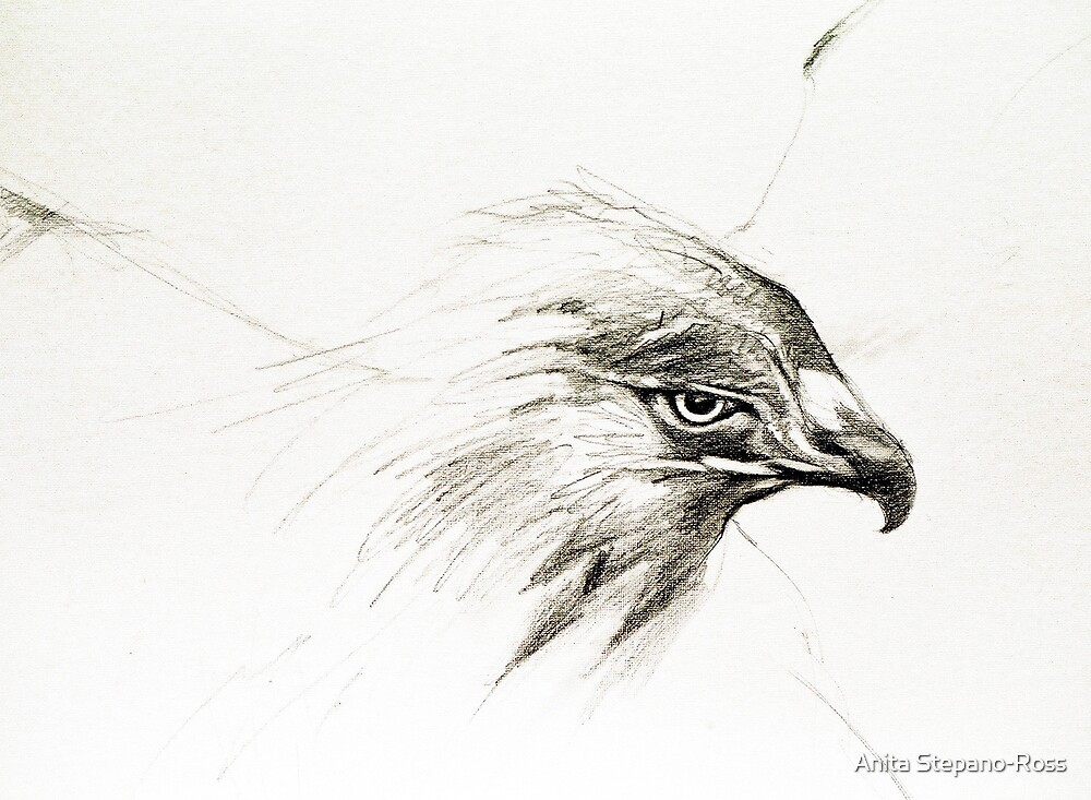 eagle head by Anita Stepano-Ross