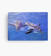Swimming In Cerulean Blue Canvas Print