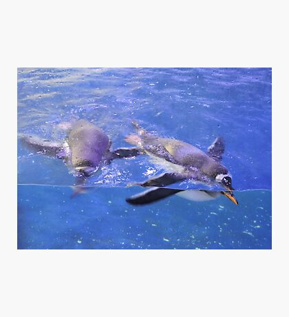 Swimming In Cerulean Blue Photographic Print