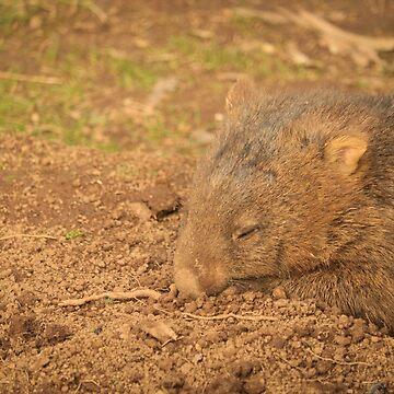 Sweet Dreams Sleepy Wombat by BonnieMadeThis
