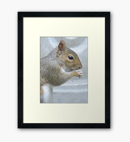 Frequent Companion Framed Print