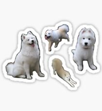Samoyed Sticker Set (cloudthesamoyed) Sticker