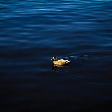 Floating Elegance - Strahan, Tasmania by BonnieMadeThis
