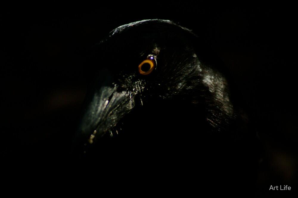 Raven by WayneD