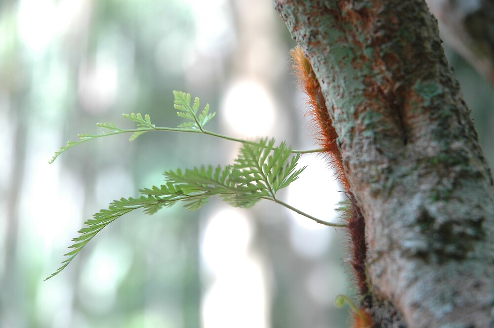 tree fern by kathie