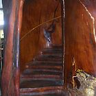 Inside A Tree by lezvee