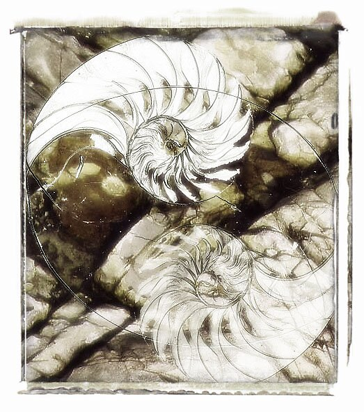 Nautalis by Melisah