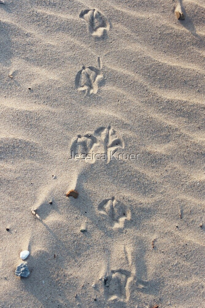 Footprints by Jessica Kruer