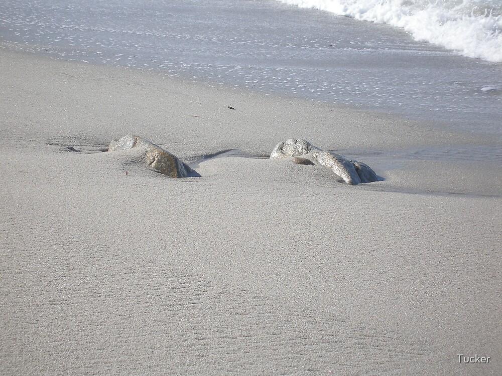 Beach by Tucker