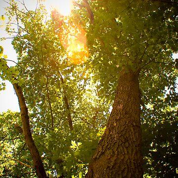 Tree to Infinity by JordanDDunn