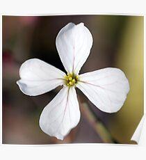 Radish Flower Poster