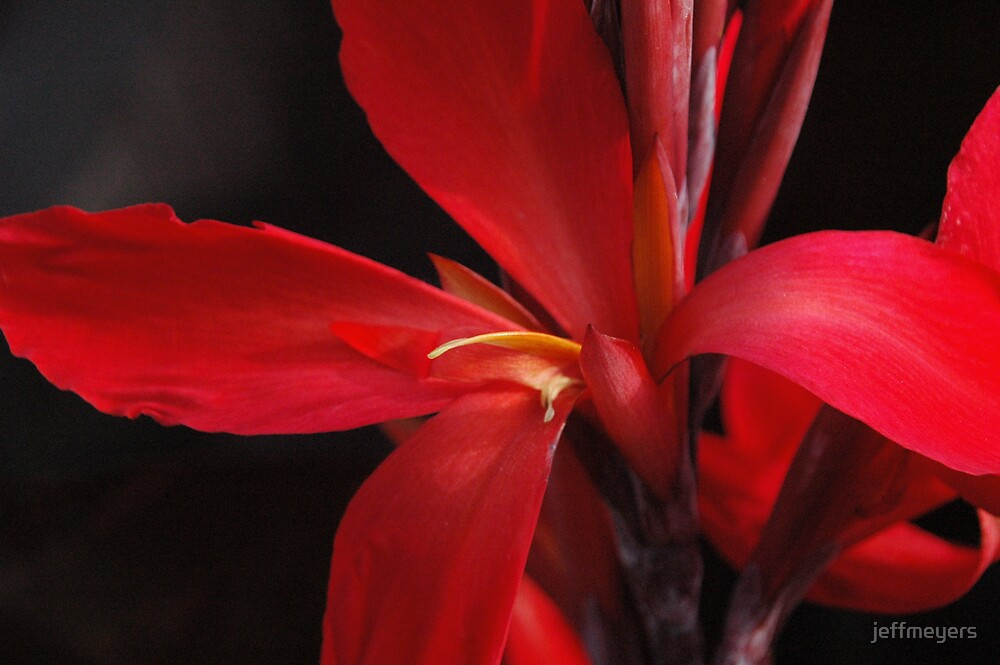 Red Flower by jeffmeyers