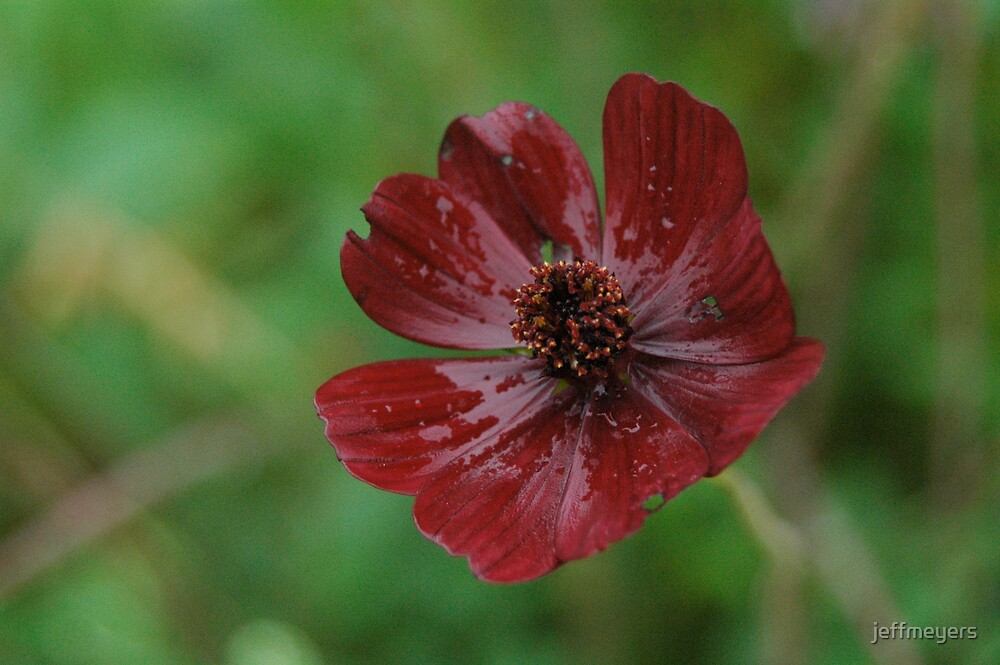 Deep Red Flower by jeffmeyers