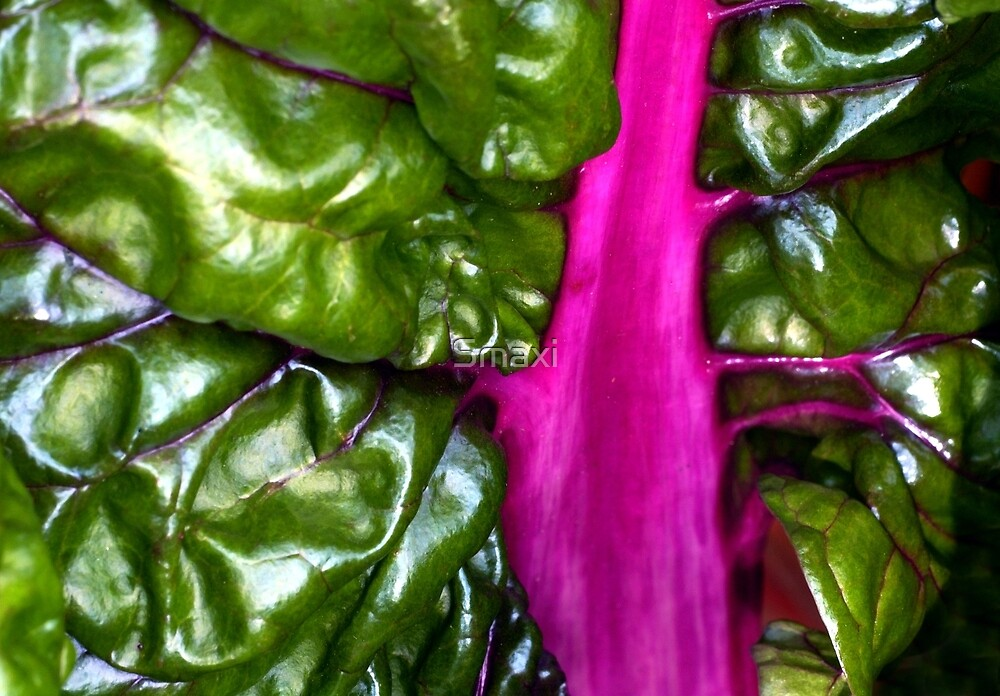 Purple Chard by Smaxi