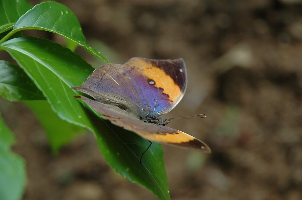 butterfly by kathie