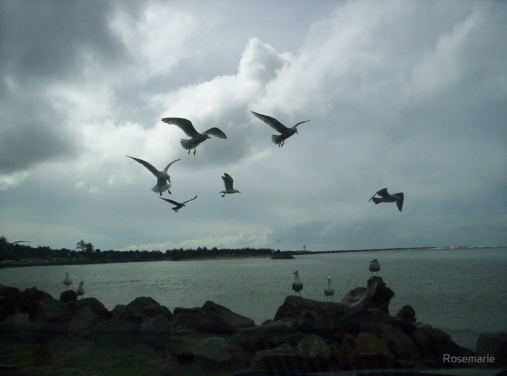 Gulls in flight-1 by Rosemarie