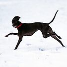 Neko Snow Dog by whippeteer