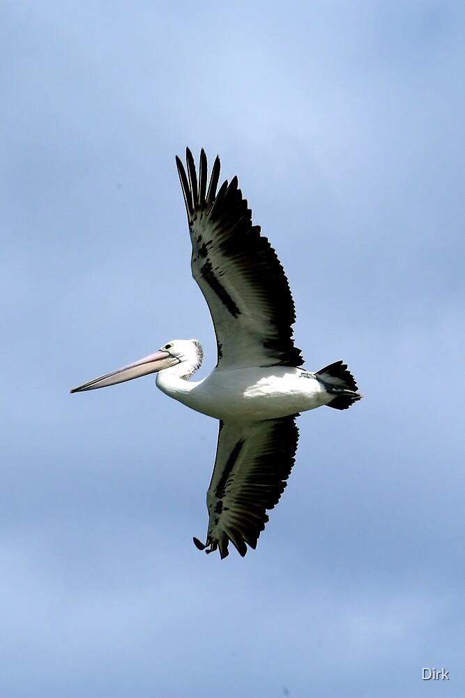 Overhead Pelican by Dirk