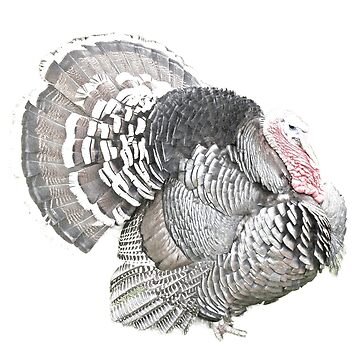 Thanksgiving Turkey. Thanksgiving Holiday. Thanksgiving Dinner! by digitaleclectic