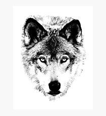 Wolf Face. Digital Wildlife Image. Photographic Print