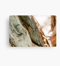 Aesthetic Tree Trunk Canvas Print