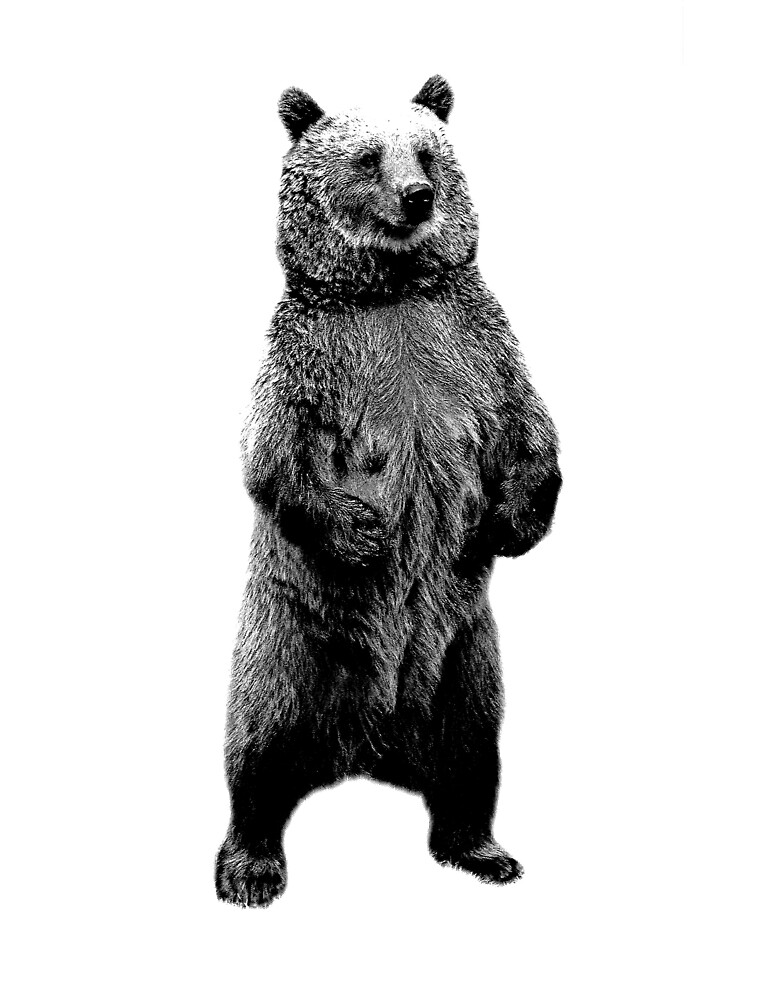 angry bear standing drawing - photo #37