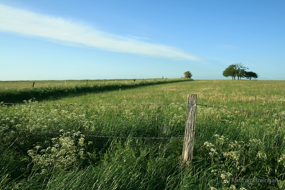 Green field  by Murray Breingan