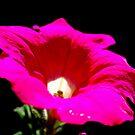 my lil flower by michael hogarth