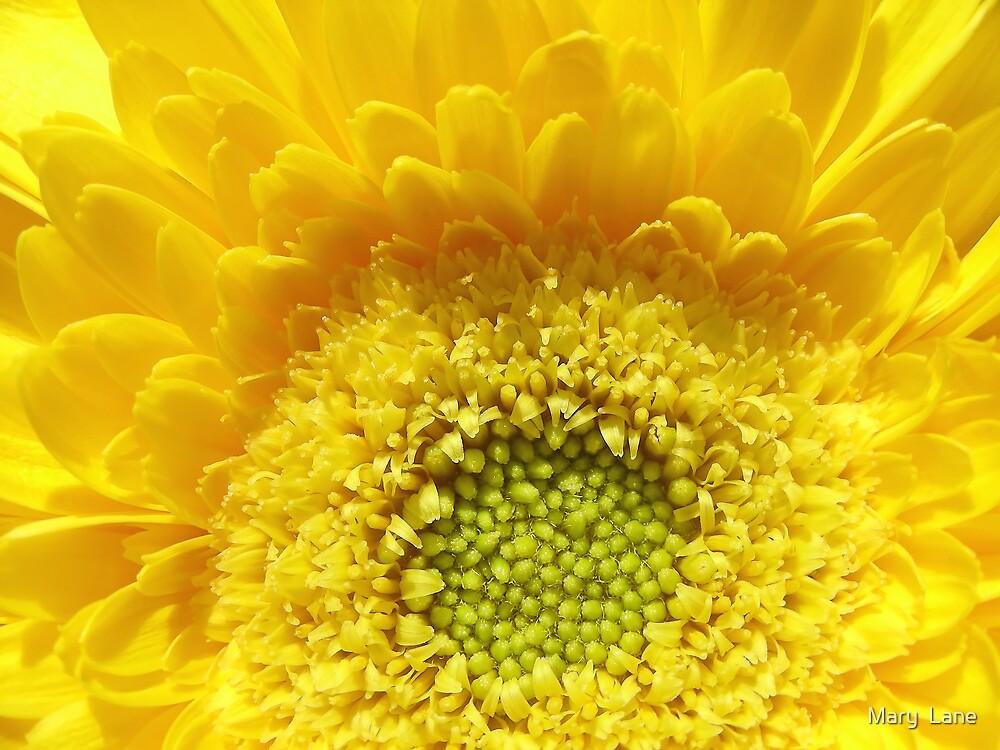 Sunshine Yellow by Mary  Lane