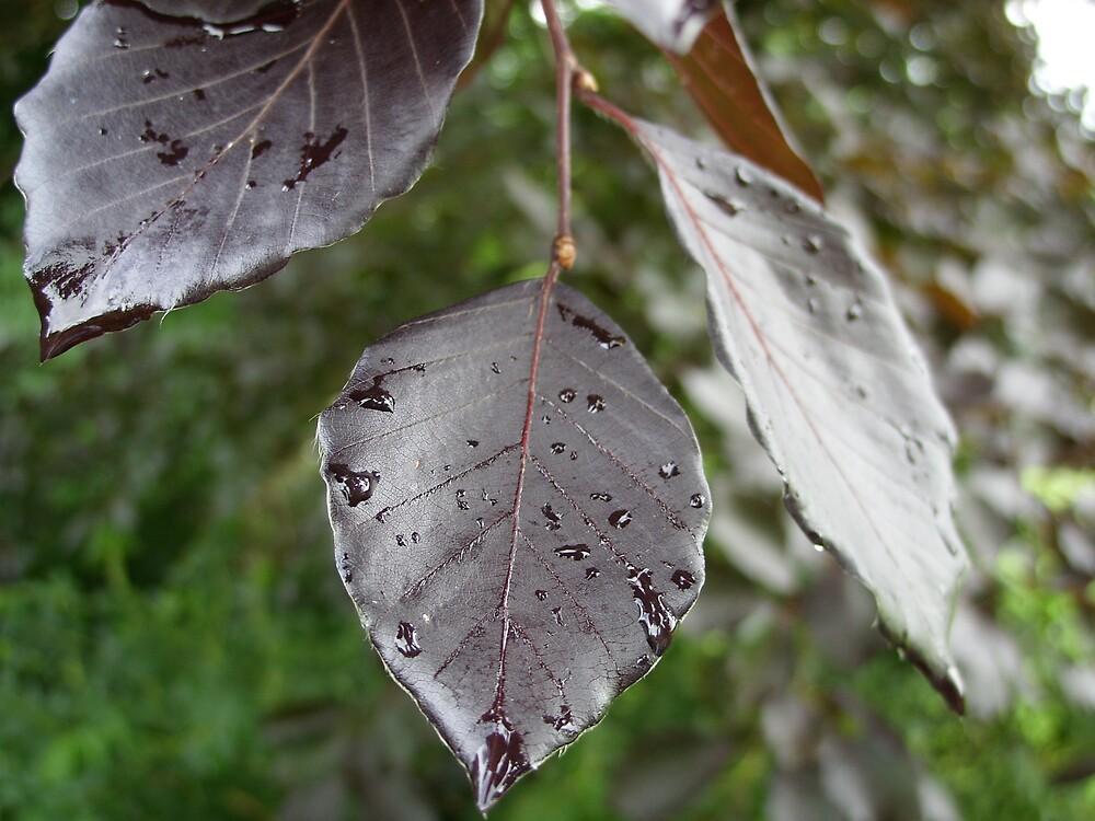 Leaves of Ireland by Reeshia1230